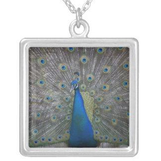 Bahamas, New Providence Island, Nassau, Male Personalized Necklace