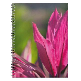 BAHAMAS, New Providence Island, Nassau: Paradise Notebook