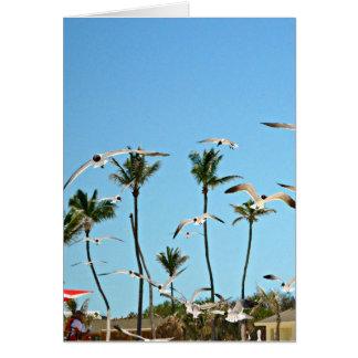 Bahamas Seagulls flying over blue skies Card