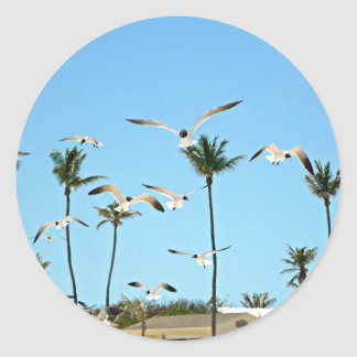Bahamas Seagulls flying over blue skies Classic Round Sticker