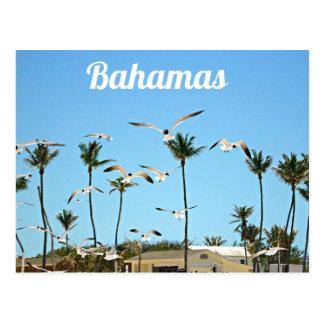 Bahamas Seagulls flying over blue skies Postcard