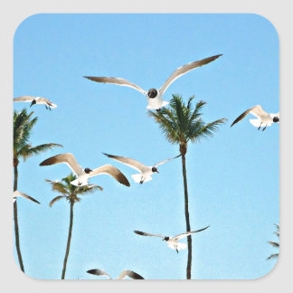 Bahamas Seagulls flying over blue skies Square Sticker