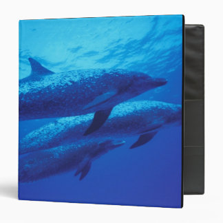 Bahamas, Spotted dophins. Binders