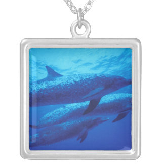 Bahamas, Spotted dophins. Silver Plated Necklace