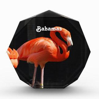 Bahamian Flamingo Award