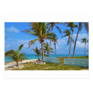 Bahamian Palms Postcard