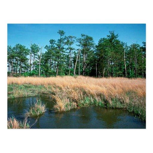 Bahía de Chesapeake, área de la jerarquía de Eagle Postales