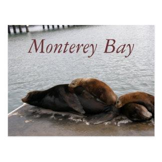 Bahía de Monterey - postal de los leones marinos