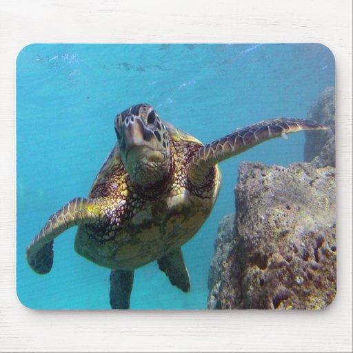 BAHÍA HAWAII de HANAUMA - tortuga de mar de Hawaii Alfombrilla De Ratones