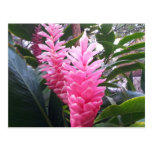 BAHÍA HAWAII - flor de HANAUMA del jengibre rojo Tarjetas Postales