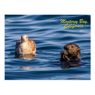 Bahía joven de Nutria-Monterey, postal de Californ