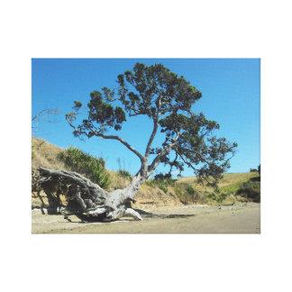 Bahía larga del árbol nativo antiguo de Pohutukawa Lona Estirada Galerias