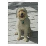 Bailey el perro hermoso que presenta en la cubiert tarjeton