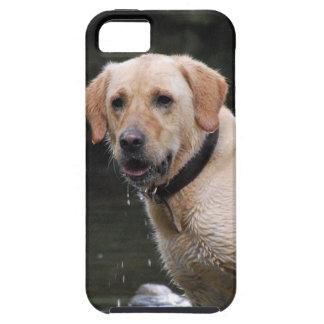 Bailey iPhone SE/5/5s Case
