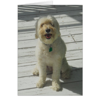 Bailey the Beautiful Dog Posing on the Deck - Card