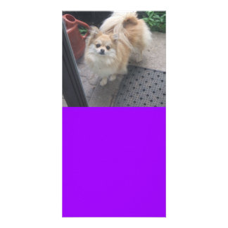 Bailey the Pomeranian Designed Book Mark Card