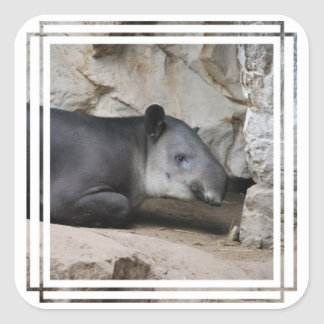 Baird's Tapir Stickers