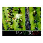 Baja Mexico Postcard