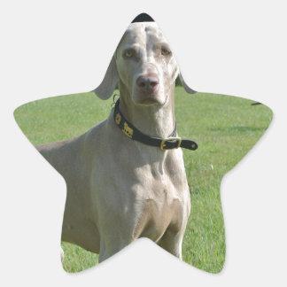 Bajá Pegatina En Forma De Estrella