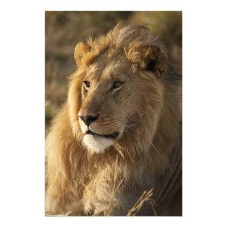 Baje Mara en la reserva del juego de Mara del Masa Impresiones Fotográficas
