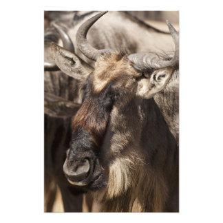 Baje reserva del juego de Mara, Mara del Masai, Impresión Fotográfica