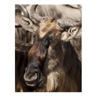 Baje reserva del juego de Mara, Mara del Masai, Postales
