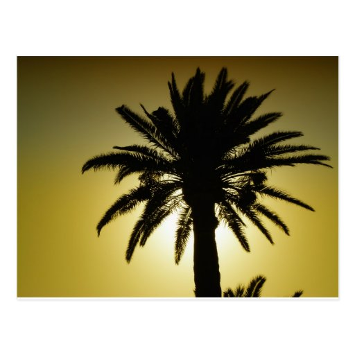 Bajo las palmeras postal