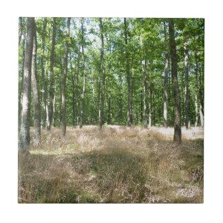 bajo madera y alfombra de gramíneas en el otoño azulejo cuadrado pequeño