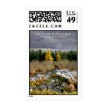 Baker River Valley Larch Bog Stamp