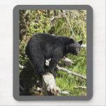 """""""Balancing Act"""" Black Bear gifts Mouse Pad"""