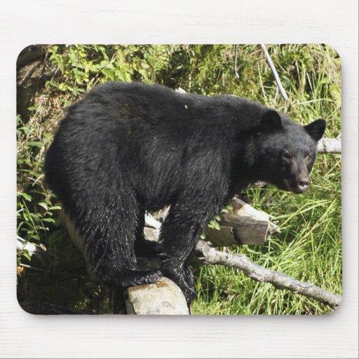"""""""Balancing Act"""" Black Bear Mousepad"""