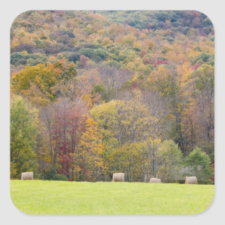 Balas y follaje de otoño de heno, en una granja pegatina cuadrada