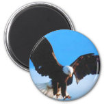 Bald American Eagle 2 Inch Round Magnet