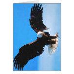 Bald American Eagle Card