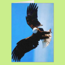 Bald American Eagle Card