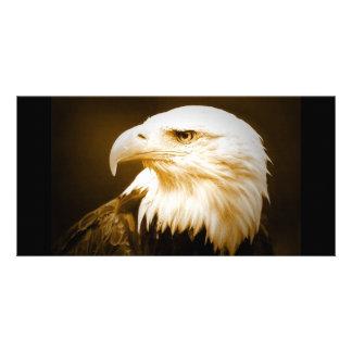 Bald American Eagle Eye Card