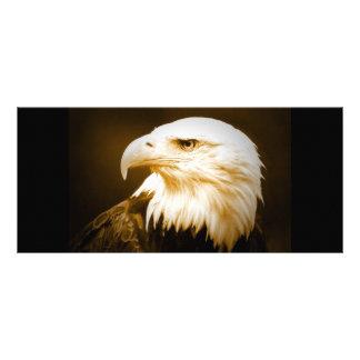 Bald American Eagle Eye Rack Card
