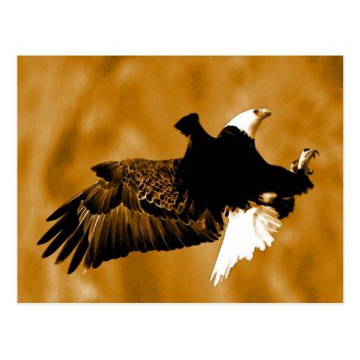 Bald American Eagle Postcard