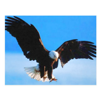 Bald American Eagle Postcard