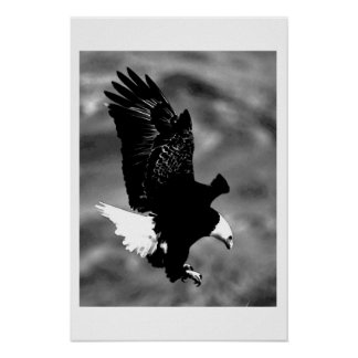 Bald American Eagle Poster Print BW Eagles Posters