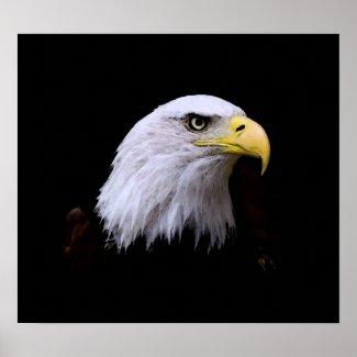 Bald American Eagle Print