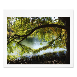 Bald Cypress limb over water Photo Print