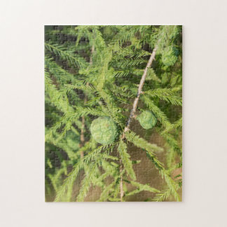 Bald Cypress Seed Cone Jigsaw Puzzle