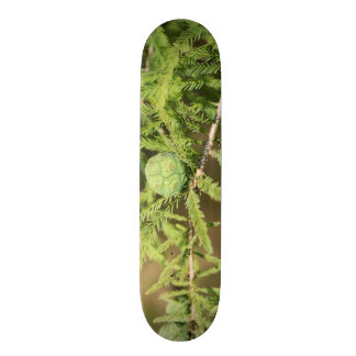 Bald Cypress Seed Cone Skateboard