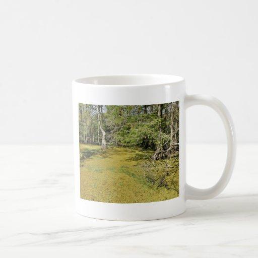 Bald cypress swamp and duckweed classic white coffee mug