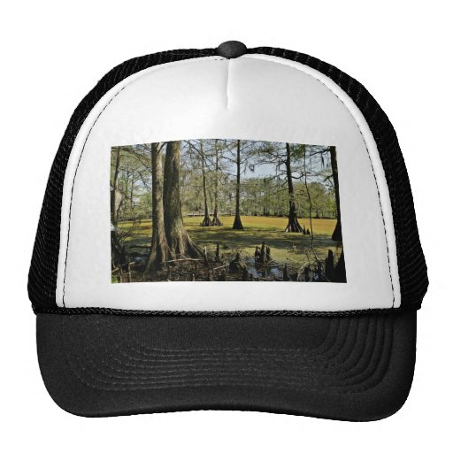 Bald cypress trees and boardwalk hats