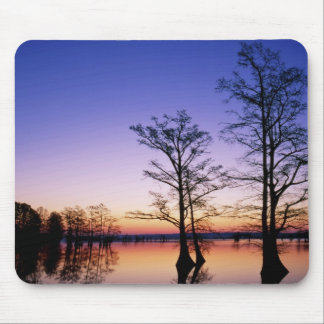 Bald cypress trees silhouetted at sunset, mouse pad