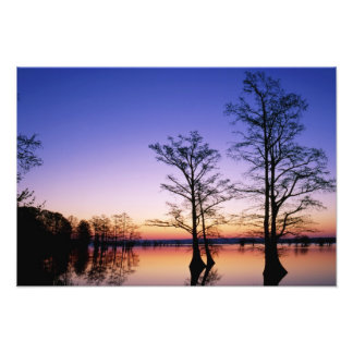 Bald cypress trees silhouetted at sunset, photo print