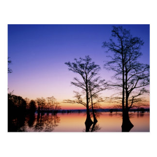 Bald cypress trees silhouetted at sunset, postcard