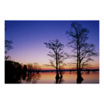 Bald cypress trees silhouetted at sunset, poster